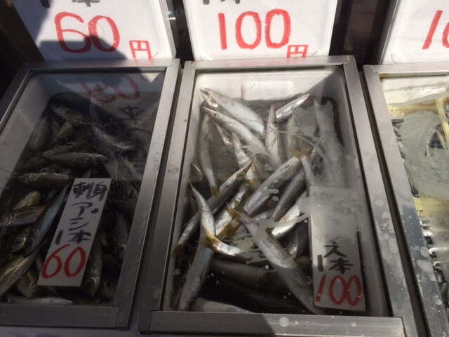森下鮮魚店で売られいたカマスと朝どれアジ