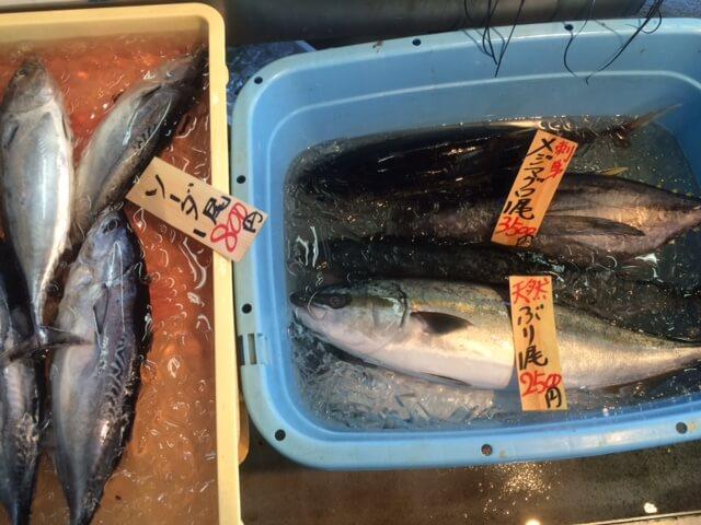長井水産のソーダガツオとブリ、メジマグロの鮮魚の画像