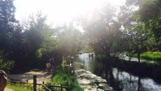 安曇野の大王わさび農園は一面わさび畑の絶景!水がキレイで観光におすすめです。