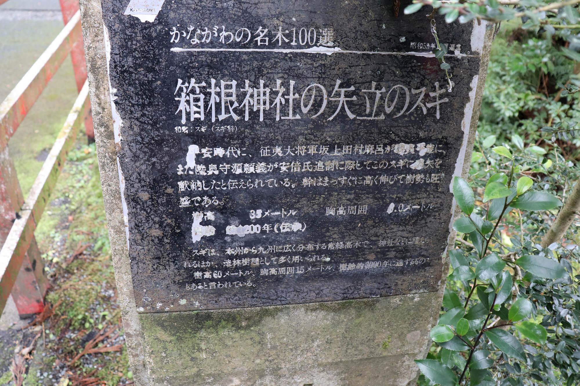 箱根神社の矢立の杉の解説