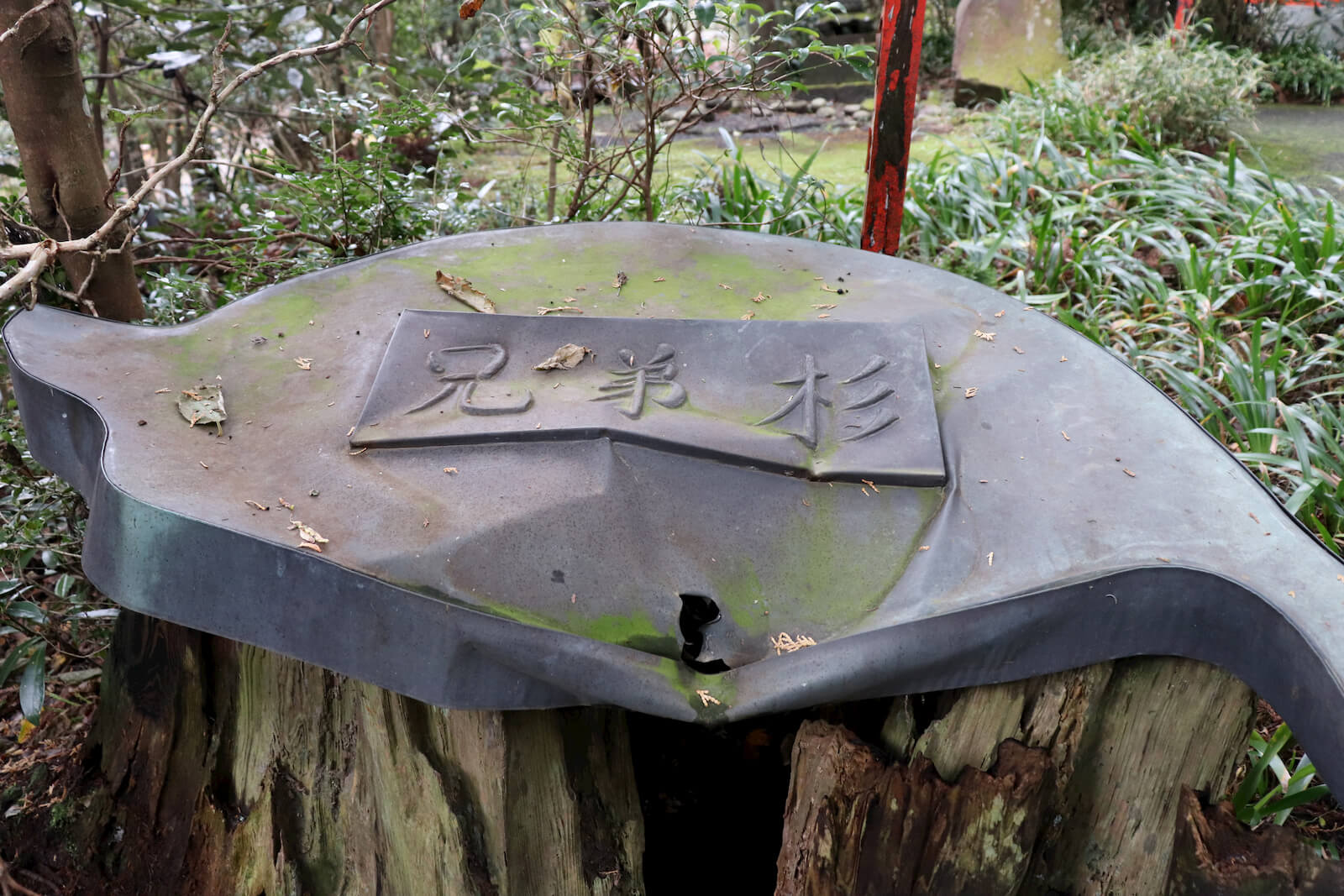箱根神社の兄弟杉