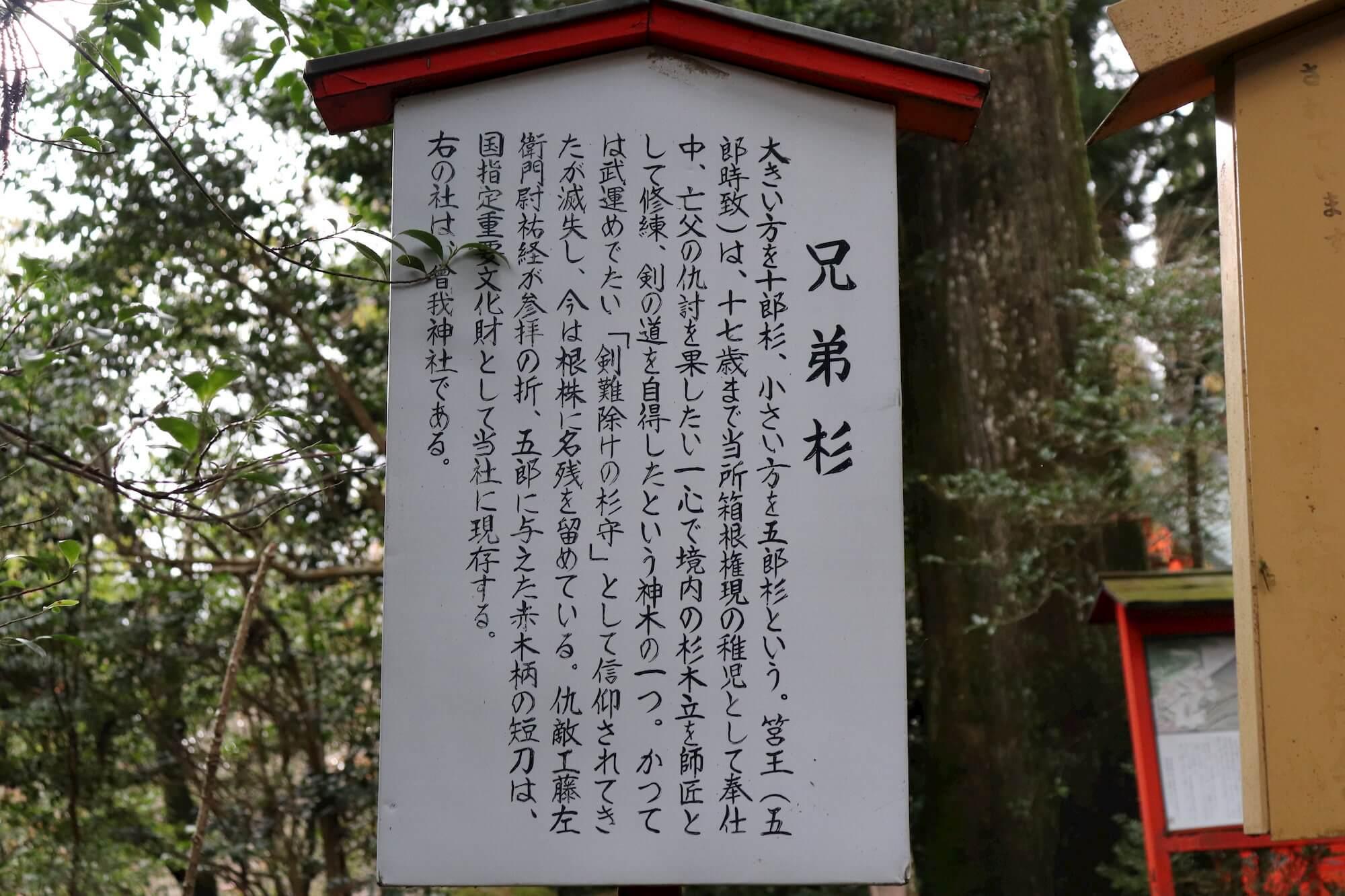 箱根神社の兄弟杉の解説