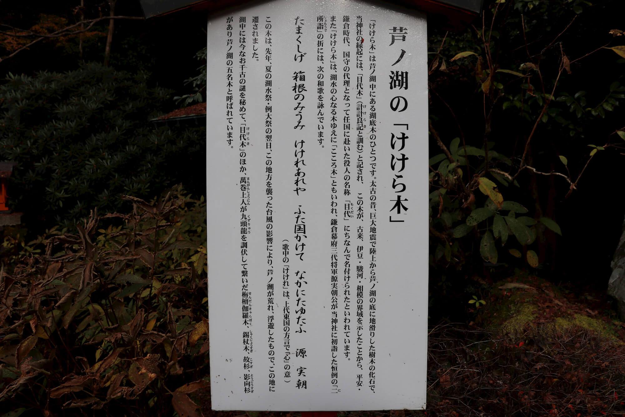 けけら木の解説