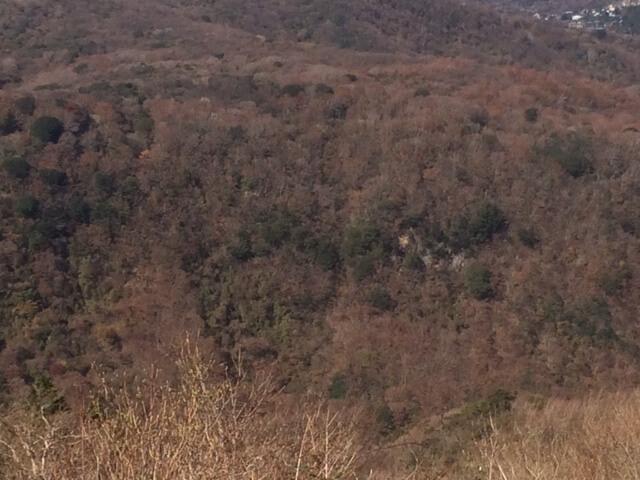 大観山から見える紅葉