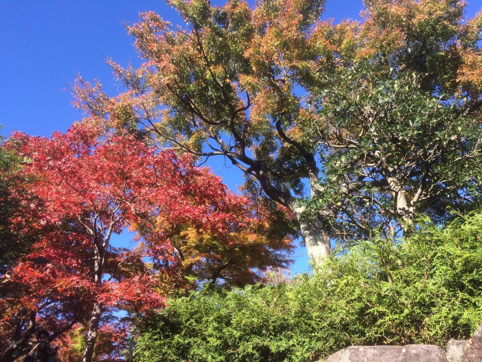 箱根美術館の紅葉した木々
