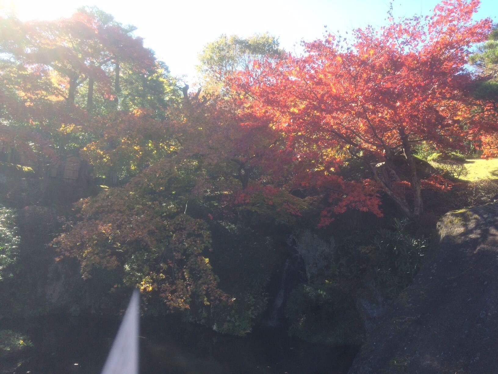 箱根美術館の滝と紅葉