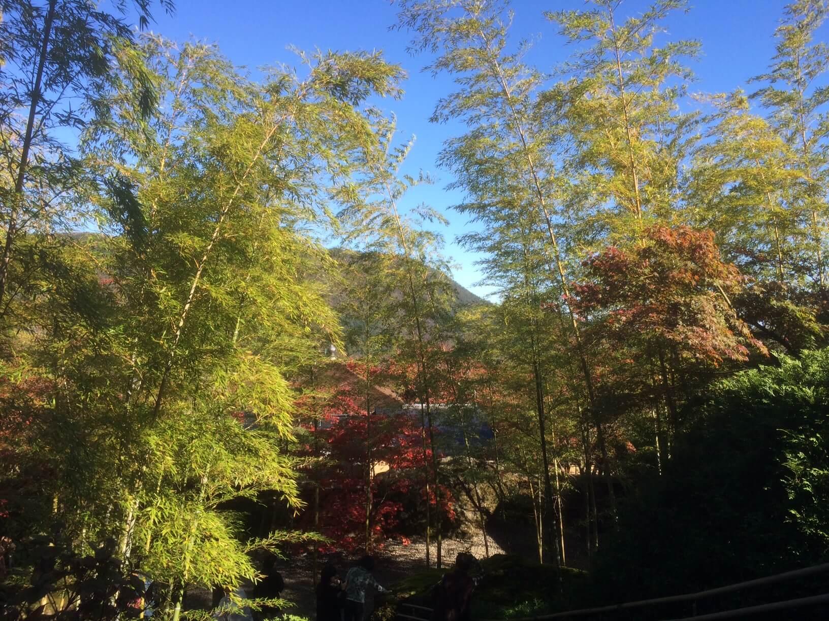 強羅公園の竹と紅葉