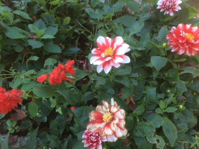 強羅公園の花