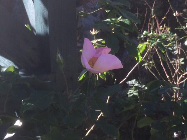 強羅公園の面白い植物