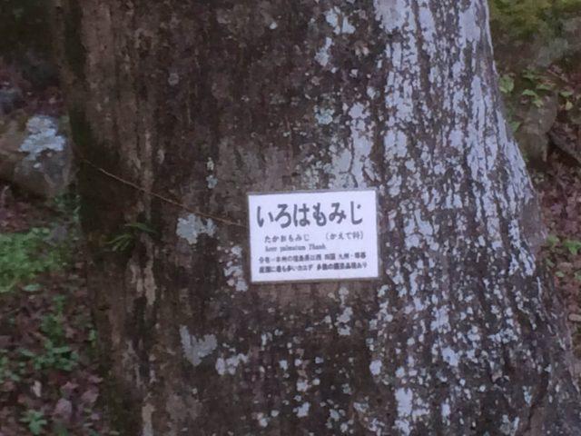熱海梅園の紅葉の種類