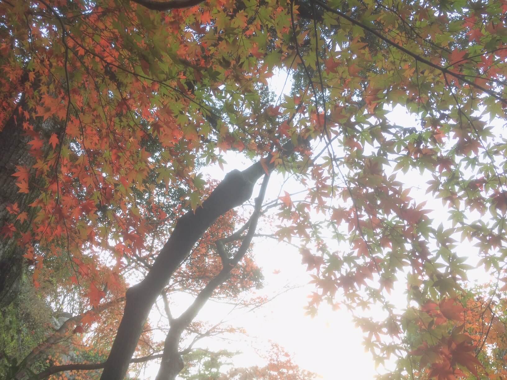 熱海梅園の紅葉