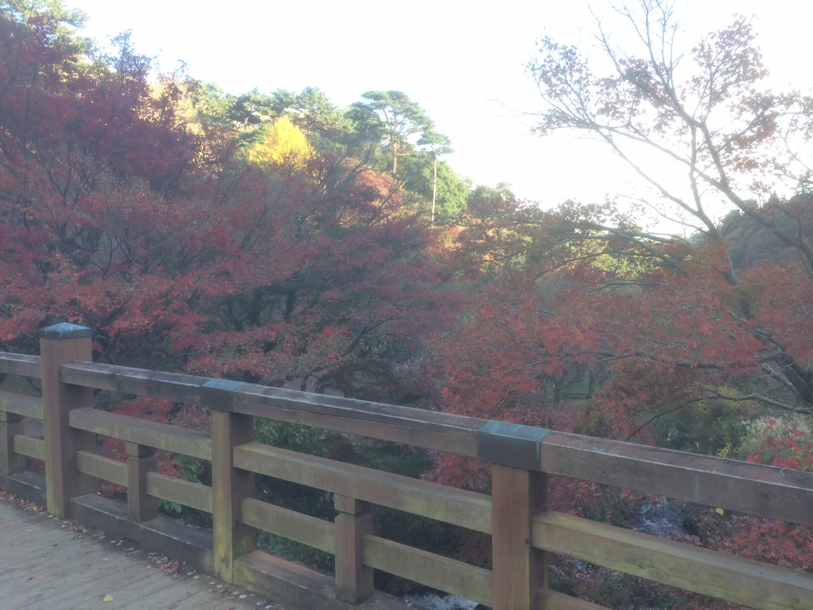 熱海梅園の橋からの紅葉