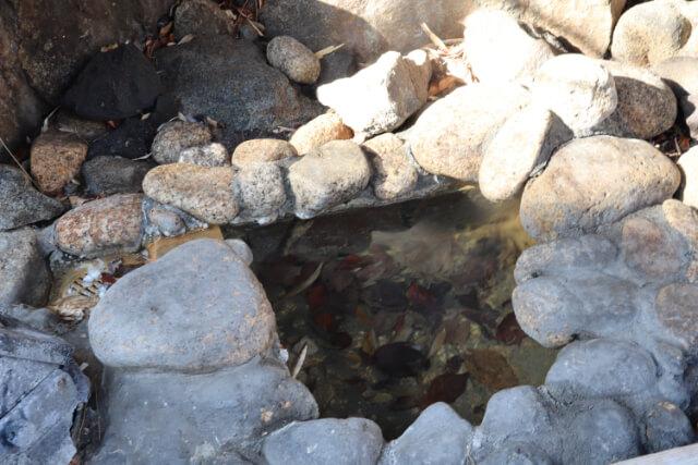熱海七湯河原の湯