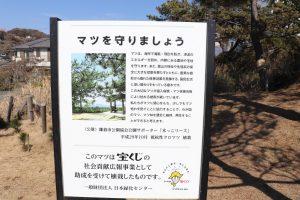 稲村ケ崎公園からの松