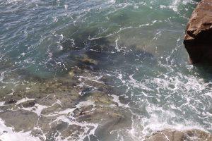 稲村ケ崎公園の海の透明度