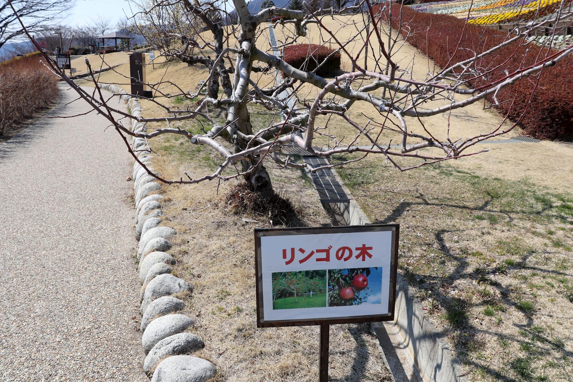 笛吹川フルーツ公園のリンゴの木