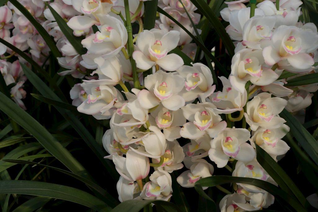 にじおとの花