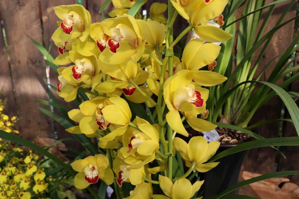 ゴールドラッシュの花