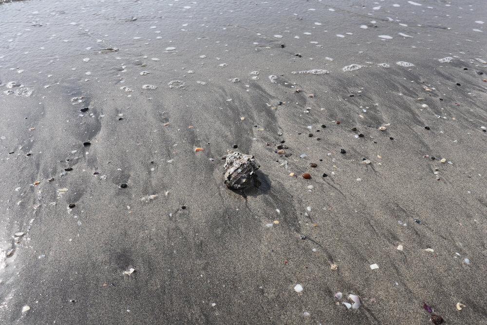 由比ケ浜に落ちていたサザエ