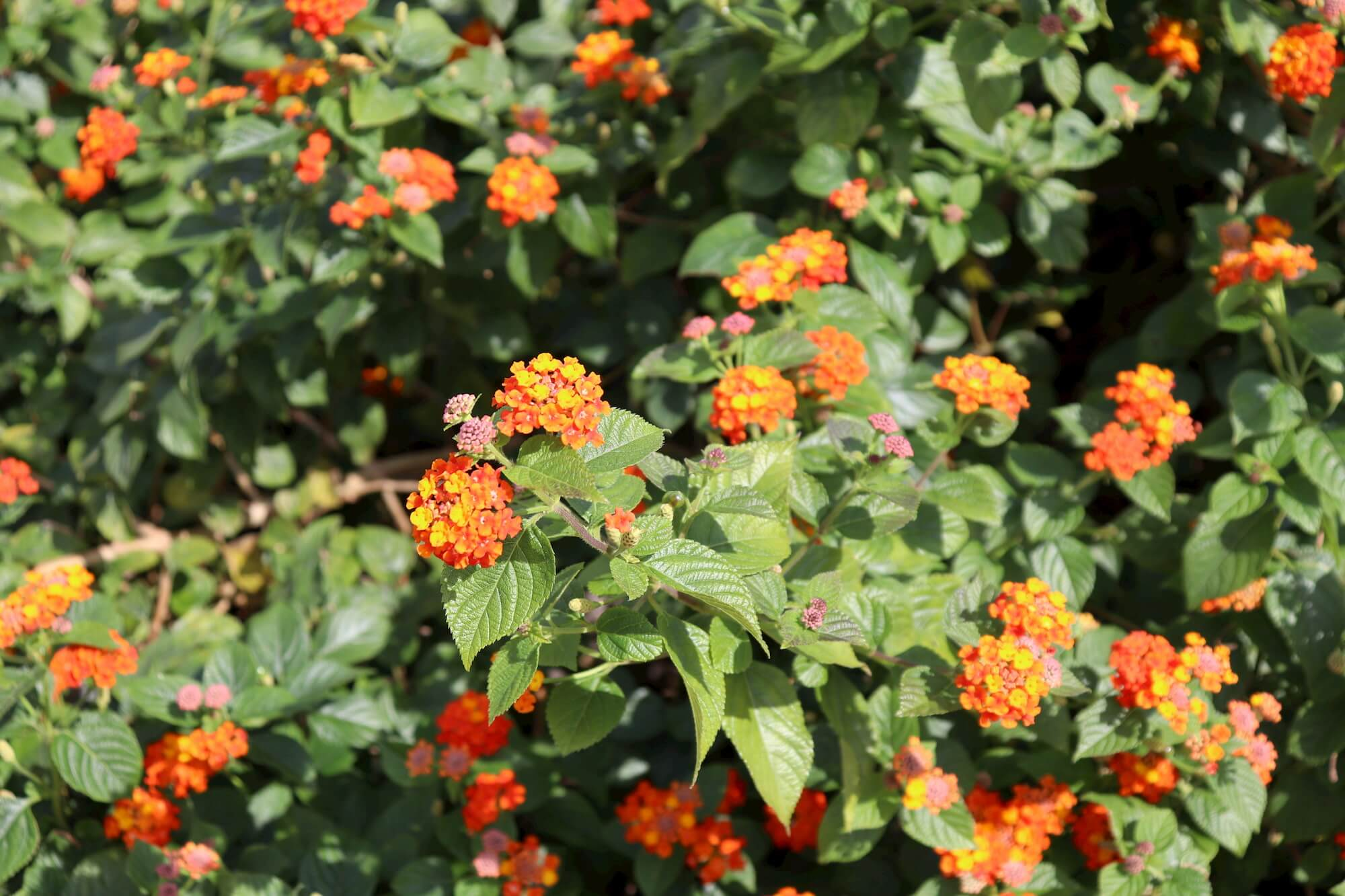 ニューヨークランプ&ミュージアムの花