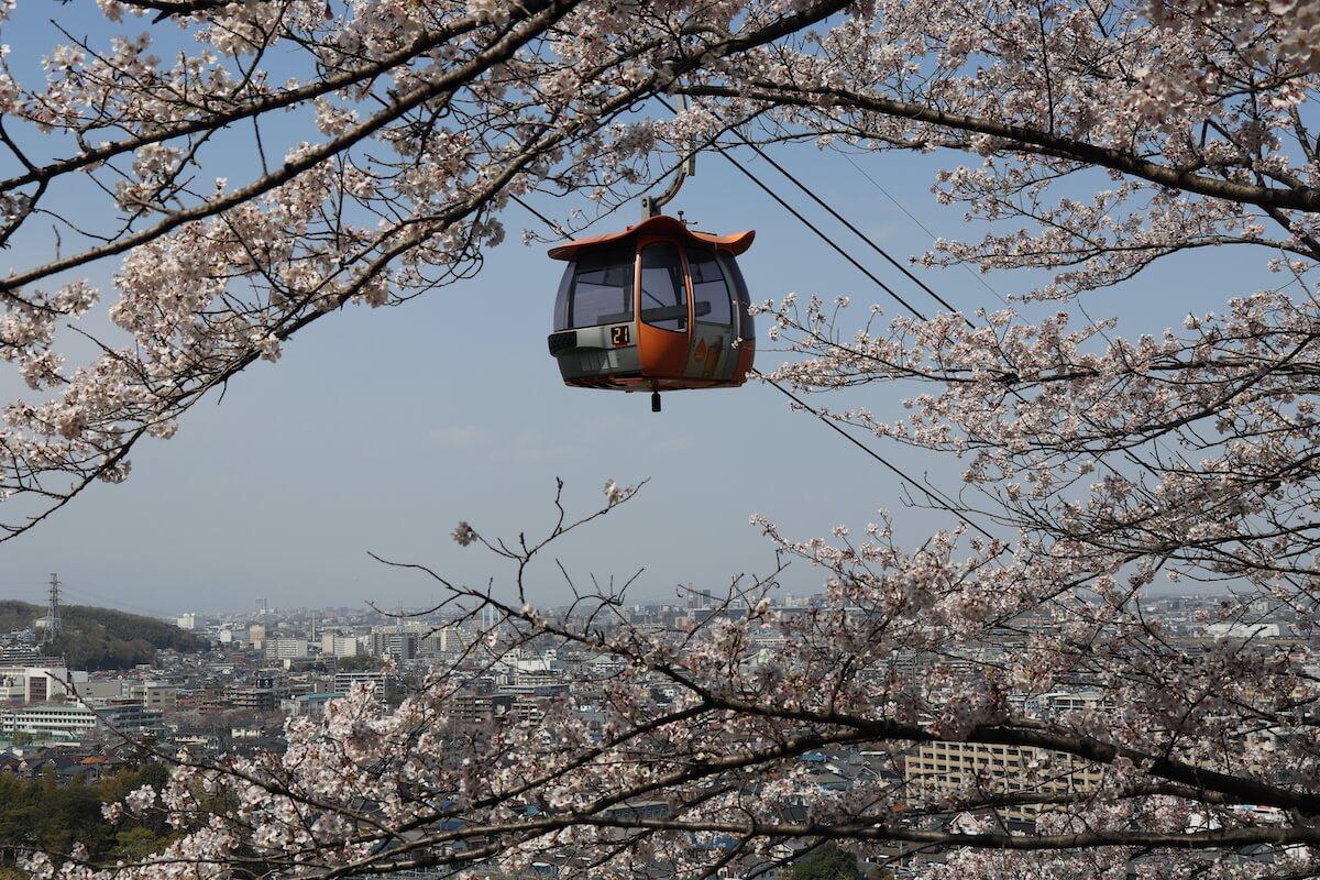 よみうりランドの桜の景色