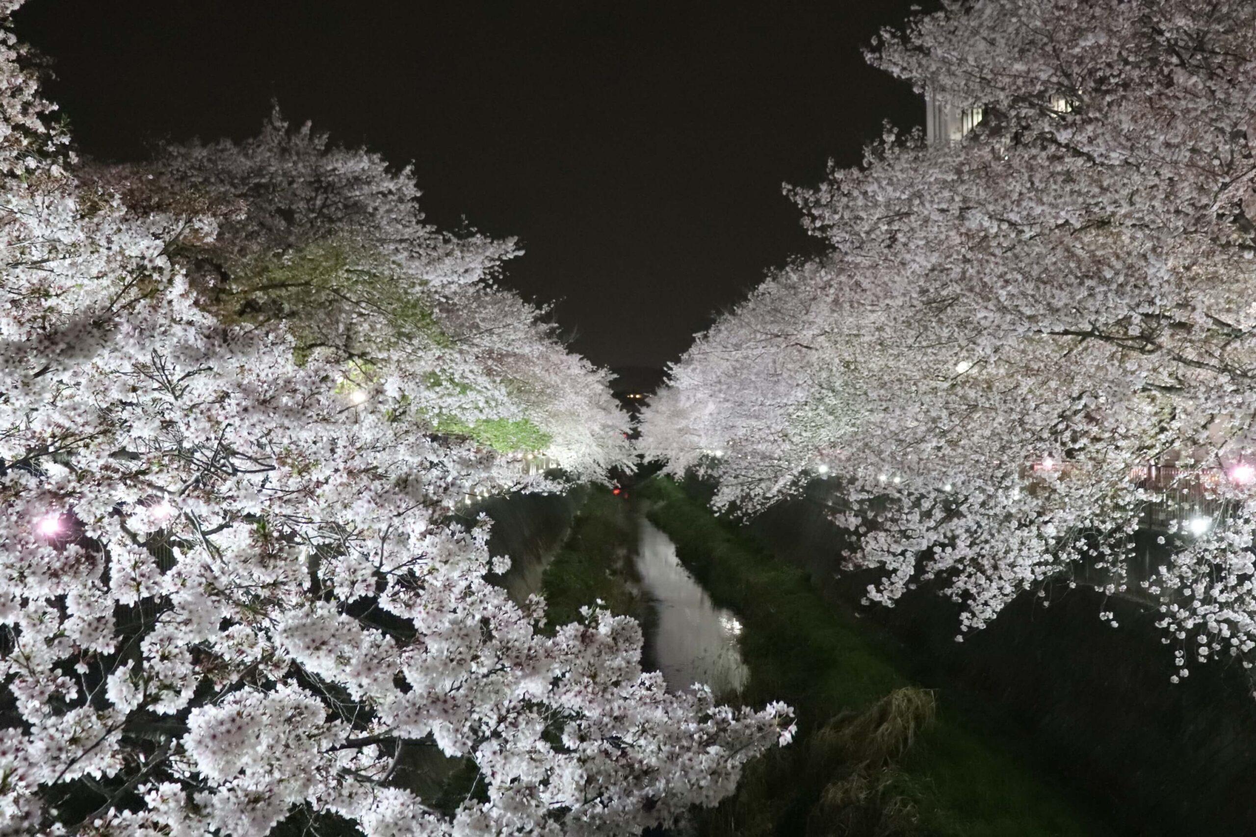 稲城市三沢川のライトアップ